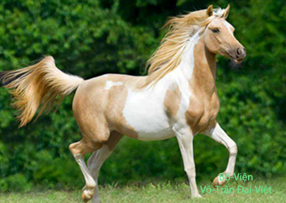 V tr n i vi t art equestre robes des chevaux - Grand galop le cheval volant ...